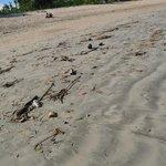 Пляж после отлива