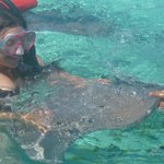 Feeding sting rays in the lagoon