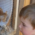 A moment with the chickens...