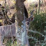 Kudu - such a special moment