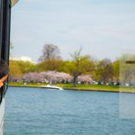Arriving at the National Mall via watertaxi! Cherry blossoms greeting this excited young visitor