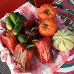 Fruits et légumes de producteurs locaux messieurs Agostini et Rouch