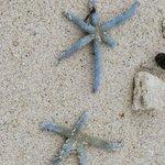 Star fish at Trou Aux Biches