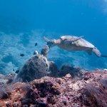 Turtle kiss @ sipadan