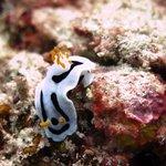 Beautiful underwater