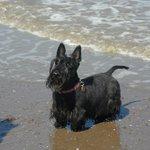Scottie Dog at Blue Anchor