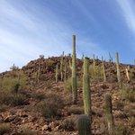 Along Hidden Canyon Trail