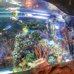 Beautifully Decorated Fishtanks