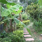 Path to bungalow