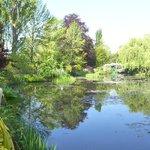 Monet's lilly pond 3