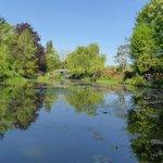 Monet's lilly pond 9