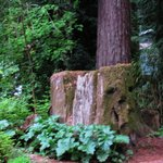 Just outside your door -- lovely redwood grove