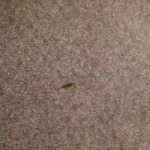 Roach out of the refrigerator