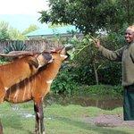 Kind Ester feeding the Bongos