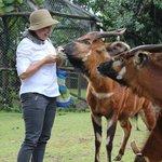 Feeding the Bongos