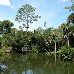 Trre Top Trek over the Gator Pond