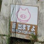 豚出ますよ