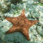 Pour l'apnée pas bcp de poissons mais étoiles de mer et ....pleins de petits oursins noirs ATTEN