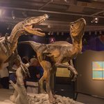 Dinosaurs rule the earth again at Te Papa Tongarewa
