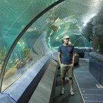 Take a stroll through the Oceanarium - or take a breather of the conveyor belt while you enjoy t