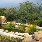 Meditation Mount's pond