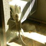 Una visita in balcone