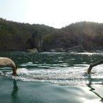 Delfin-Tour direkt vor der