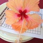 Splendidi hibiscus decorano i tavoli e il conto, per addolcire la pillola :)