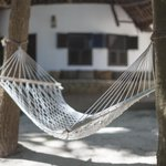 Hammock outside cottage
