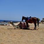 Пляж и его обитатели