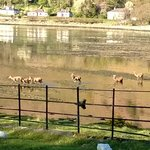 View of deer going to bathe from the garden