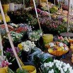 Flower Sellers in Adderley Street
