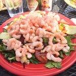 bay shrimp tropicalé