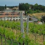 Wn av vingårdarna i Chianti