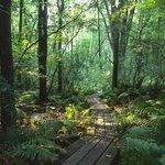 Brown's Lake Bog Nature Preserve