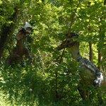 Raptors in the trees