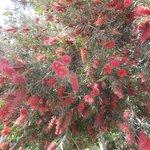 цветущие весенние кусты