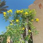цветущие кусты