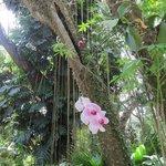 Flamingo Park - Orkid