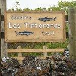 Las Tintoreras Trail - October 2013