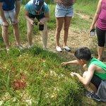 Venus flytrap-like weeds grow here in abundance.