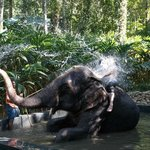 Bathtime with the Elephants