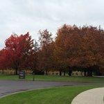 Fall foliage at the winery