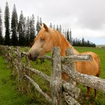 Horses in Nearby Pasture