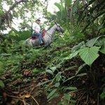 Through the jungle, horseback.