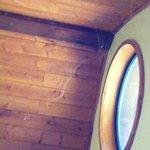 Spider webs on ceiling