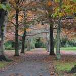 Gorgeous autumn colours