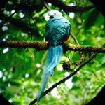 A Quetzal!