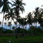 the coconut surrounding