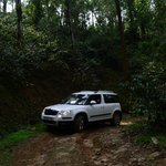 Off roading in the coffee estate